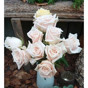 Rose Kimberley